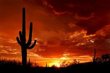 sag640px-Saguaro_Sunset